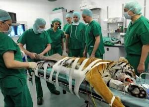 หมอรักษาเสือ