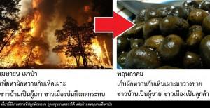 มีลูกค้า ที่รอซื้อของป่าที่ได้จากการเผา เพียบ